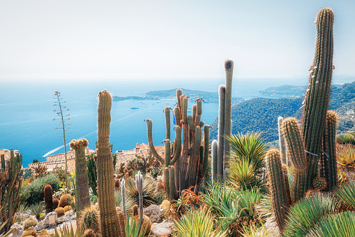 The beautiful botanical garden with exotic plants like cacti and yuccas in the French village of Eze