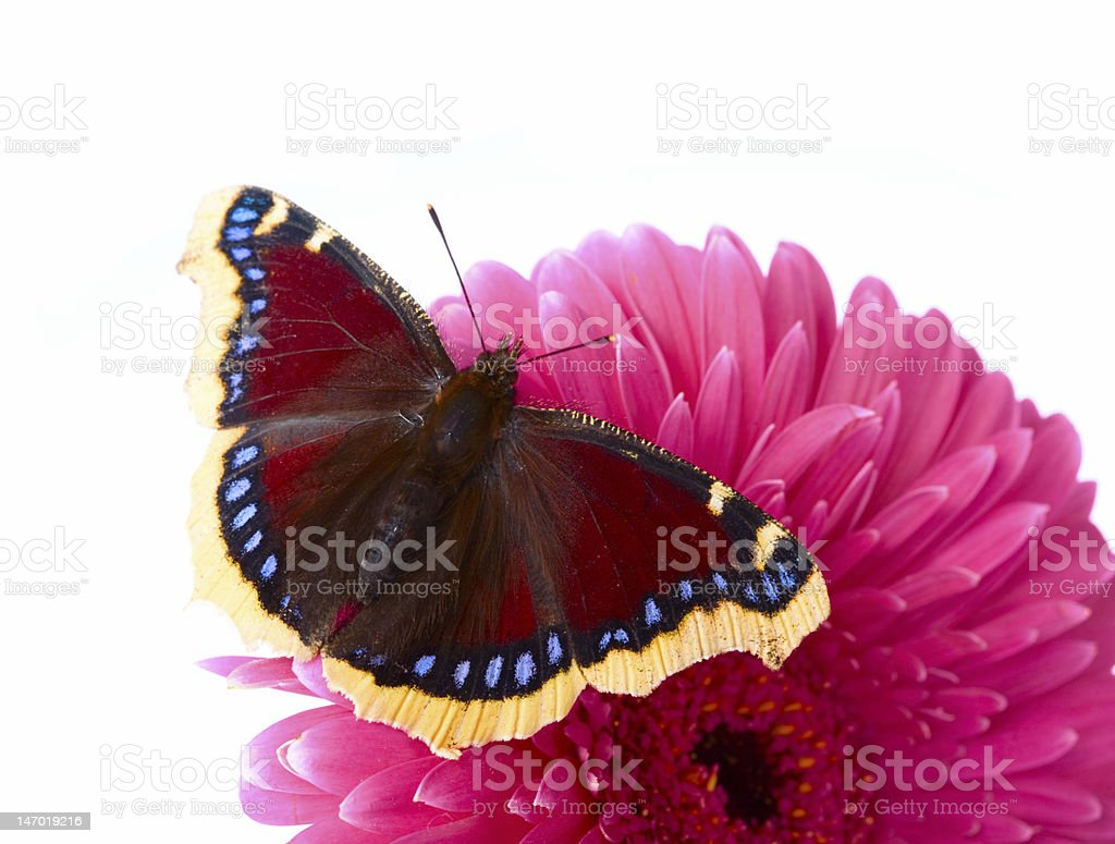 The beautiful butterfly stock photo