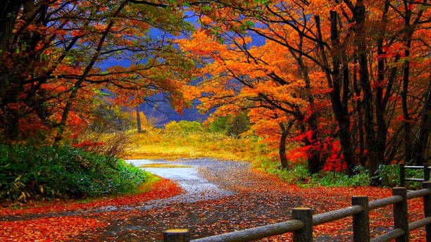 The beautiful colors of the autumn months