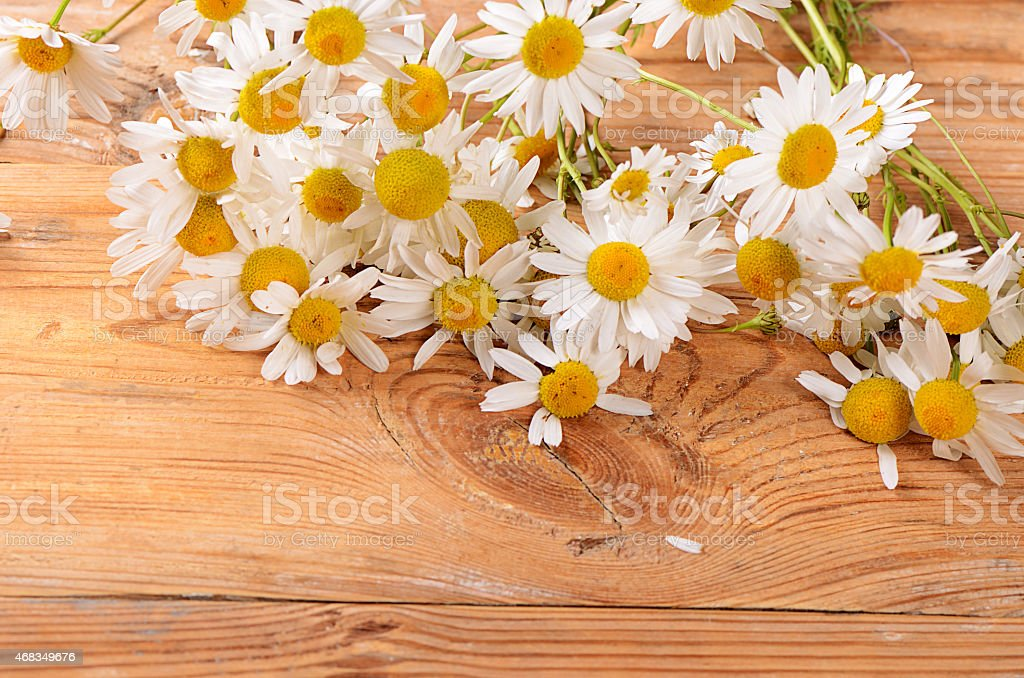 The beautiful daisy on wooden background royalty-free stock photo