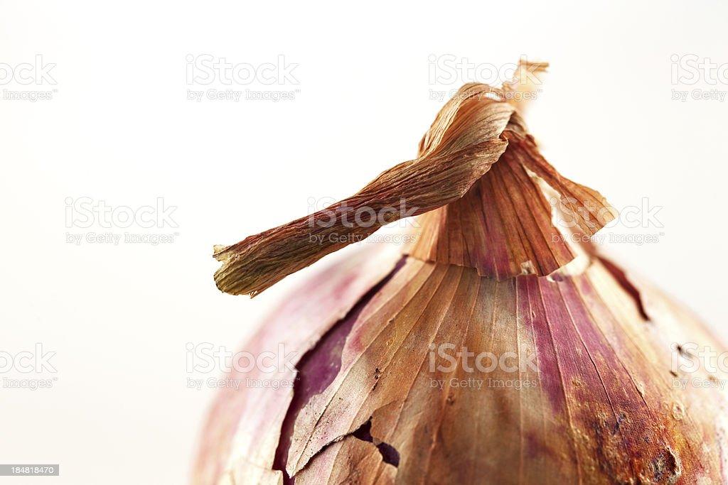 The beautiful form of onion bulb stock photo