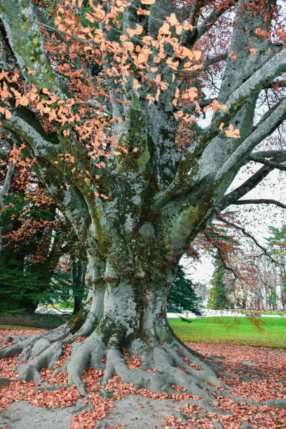 The beautiful gardens trees shrubbery of the Royal Site of La Granja de San Ildefonso stock photo