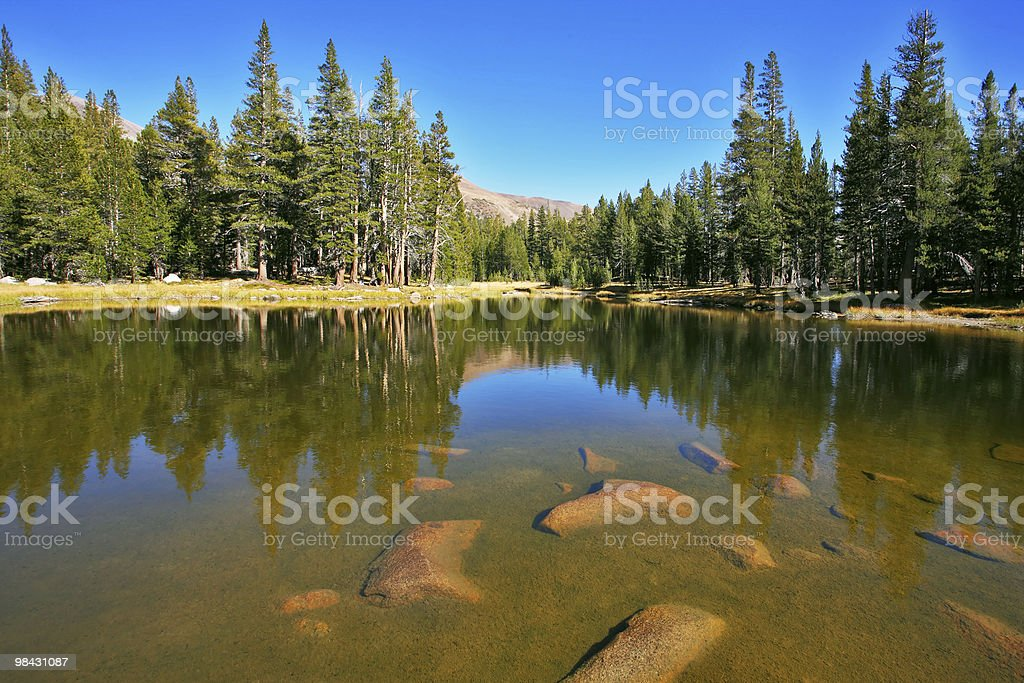The beautiful lake and fur-trees, in Josemite royalty-free stock photo
