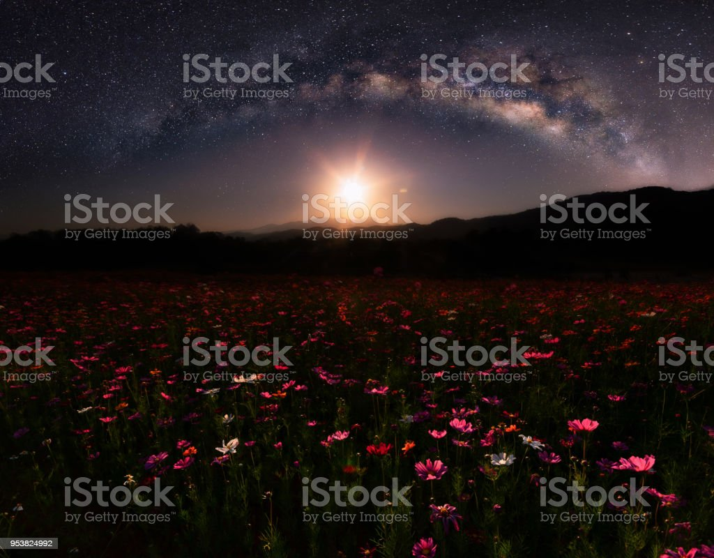 The beautiful landscape of the flowers the cosmos and the stars and the beautiful landscape of the flowers the cosmos and the stars and the milky izmirmasajfo