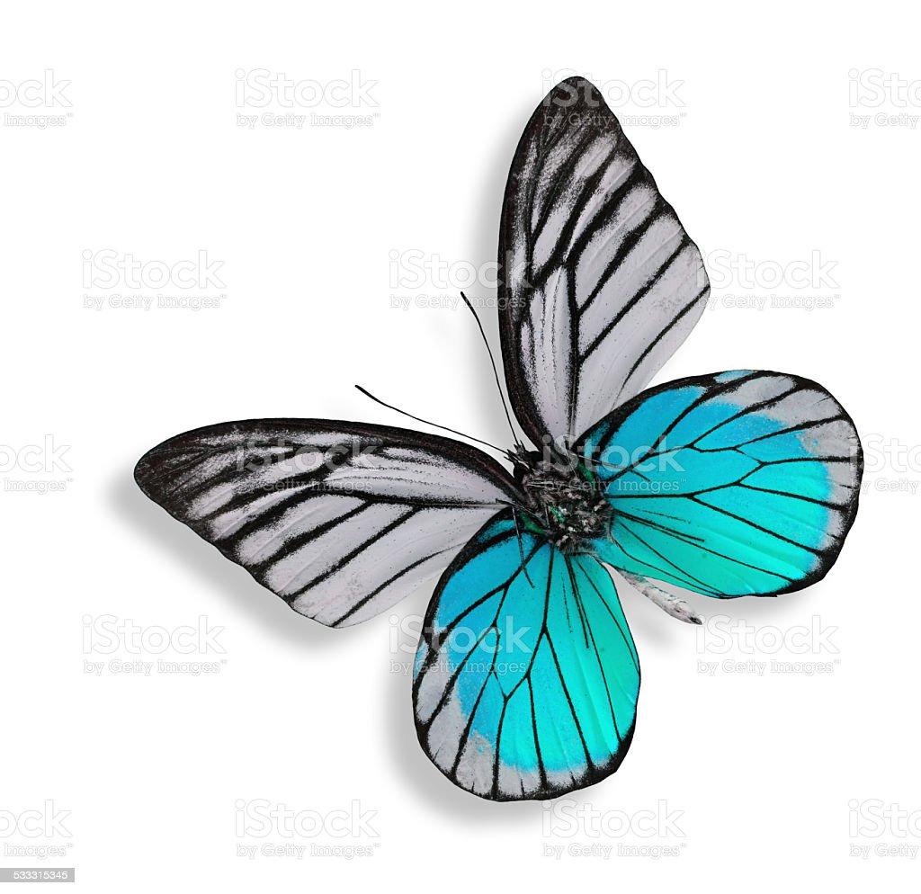 La Luce Blu Bella Farfalla Isolato Su Sfondo Bianco Fotografie