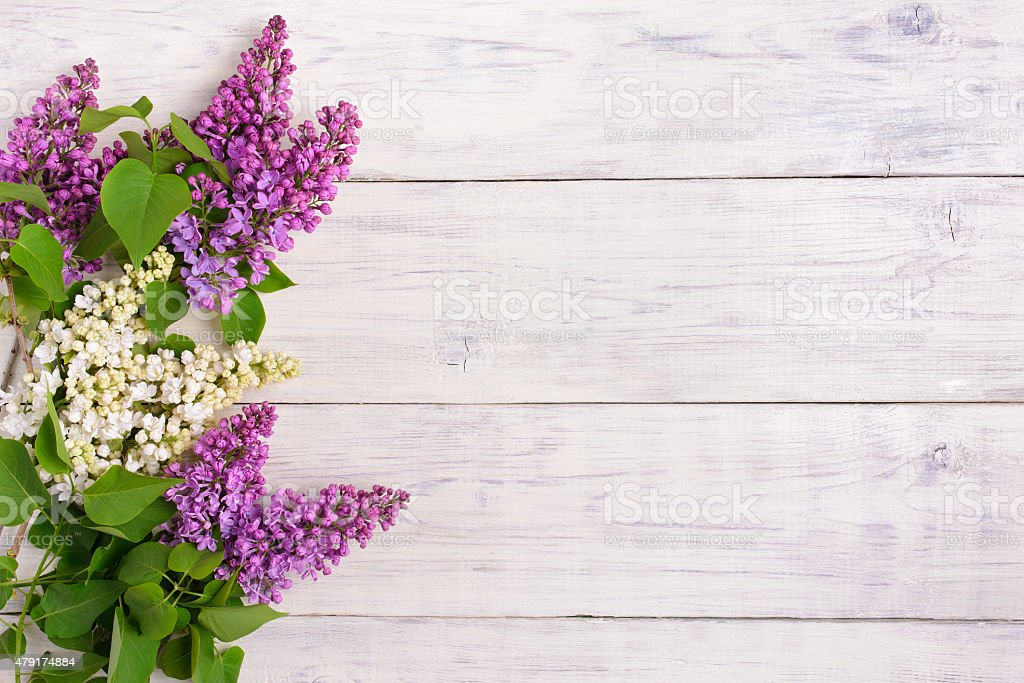 The beautiful lilac on a wooden background stock photo