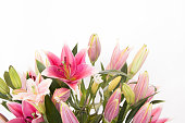 The beautiful lilly flowers are on white background.