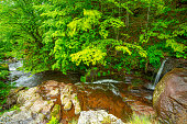 istock The beautiful mountain river  and the stones of bright red color, surrounded by forests. 1255075254