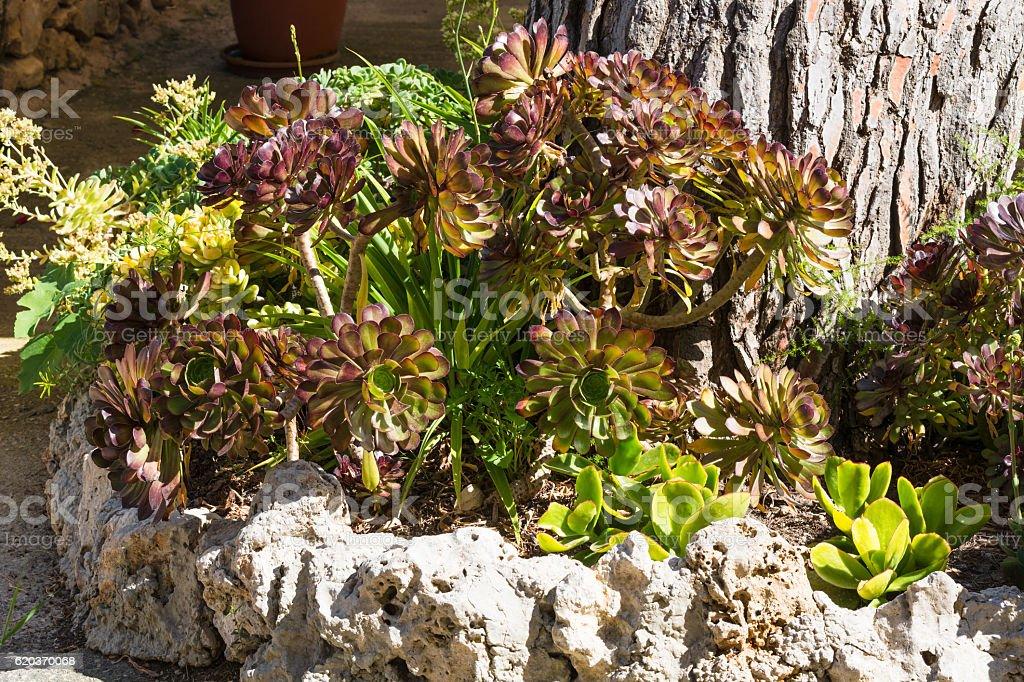 The beautiful plant world of the South zbiór zdjęć royalty-free