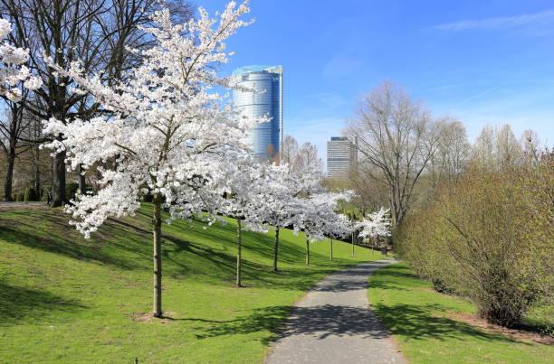 The beautiful Rheinaue park in Bonn, Germany. stock photo