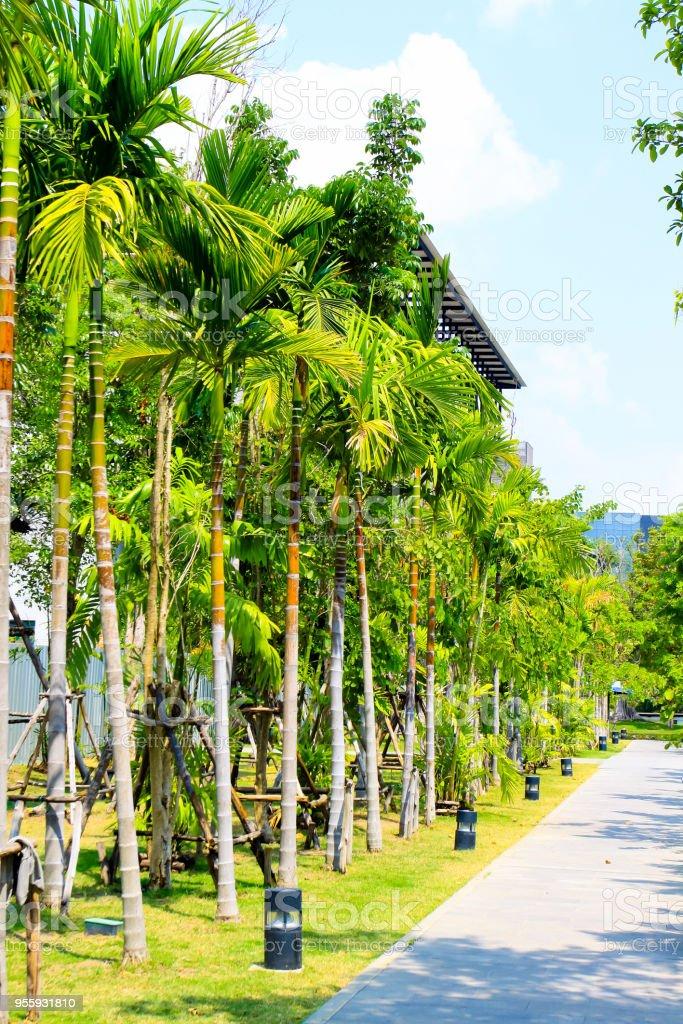 Der Schöne Baum Im Garten Stockfoto und mehr Bilder von ...