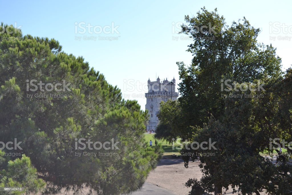 The beauty between trees royalty-free stock photo