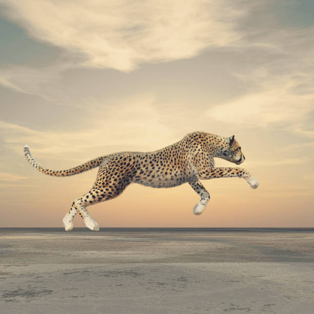 The beauty of a cheetah who running. The beauty of a cheetah who running. This is a 3d render illustration jaguar cat stock pictures, royalty-free photos & images