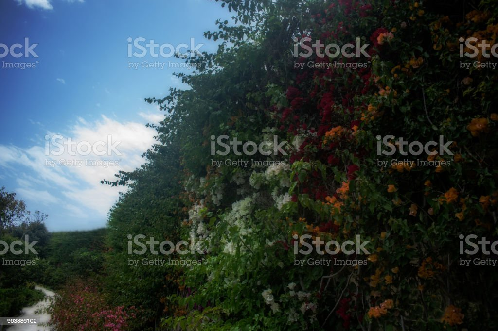 Naturens skönhet - Royaltyfri Blå Bildbanksbilder