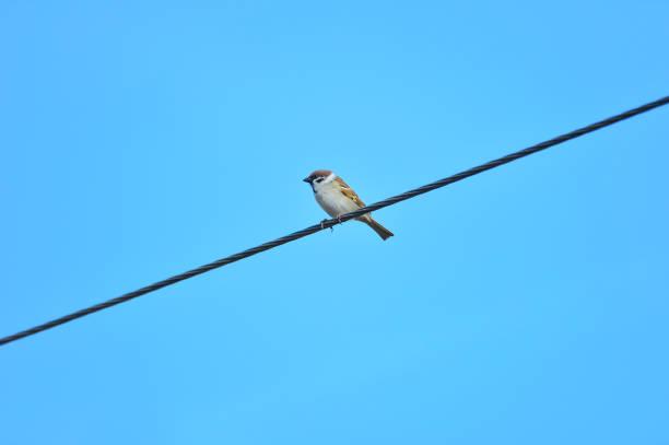 The beauty of the sparrow – zdjęcie