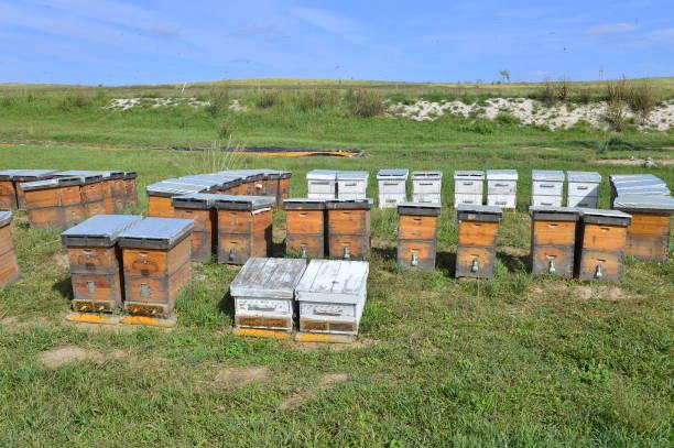 The bee hives in outdoor – zdjęcie