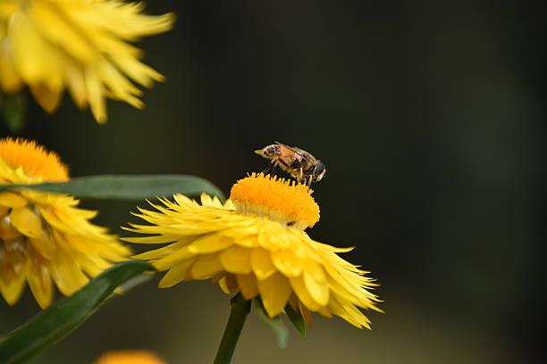 The Bee stock photo