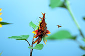 the bee that flies to the sunflower against the background of the blue sky