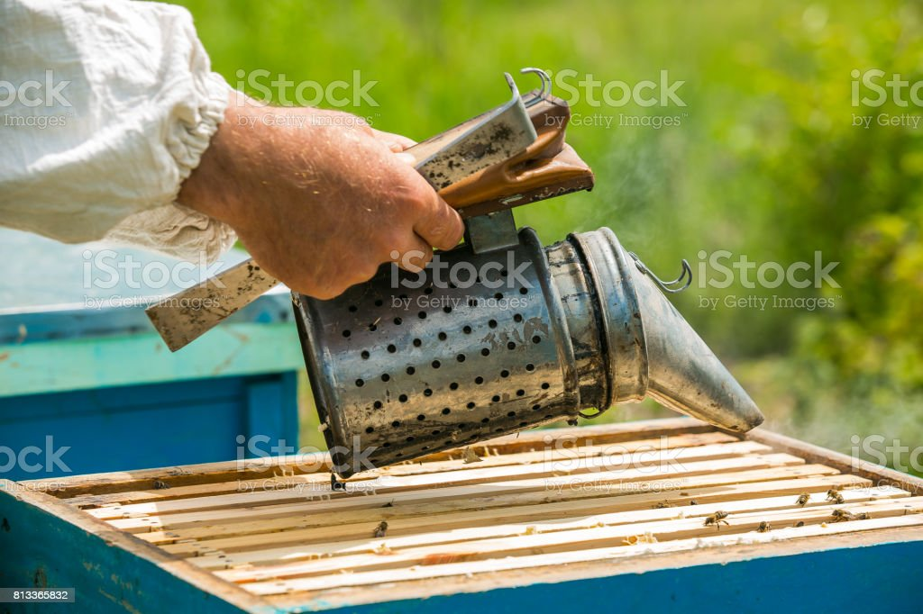 The beekeeper makes smoke under the hive. Frame with bees. Beekeeper fumigated bee smoker. Apiculture stock photo