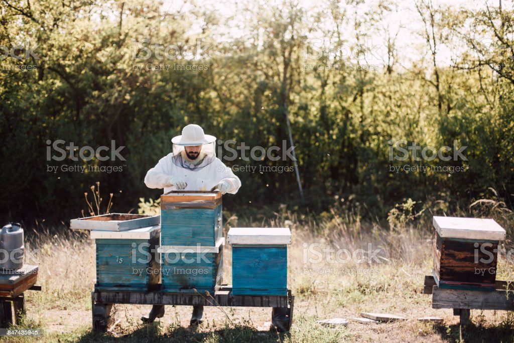 The beekeeper saves the bees. Give them a syrup. stock photo