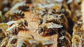 Life inside a bee hive. Bees work on frames with honey. Macro shot