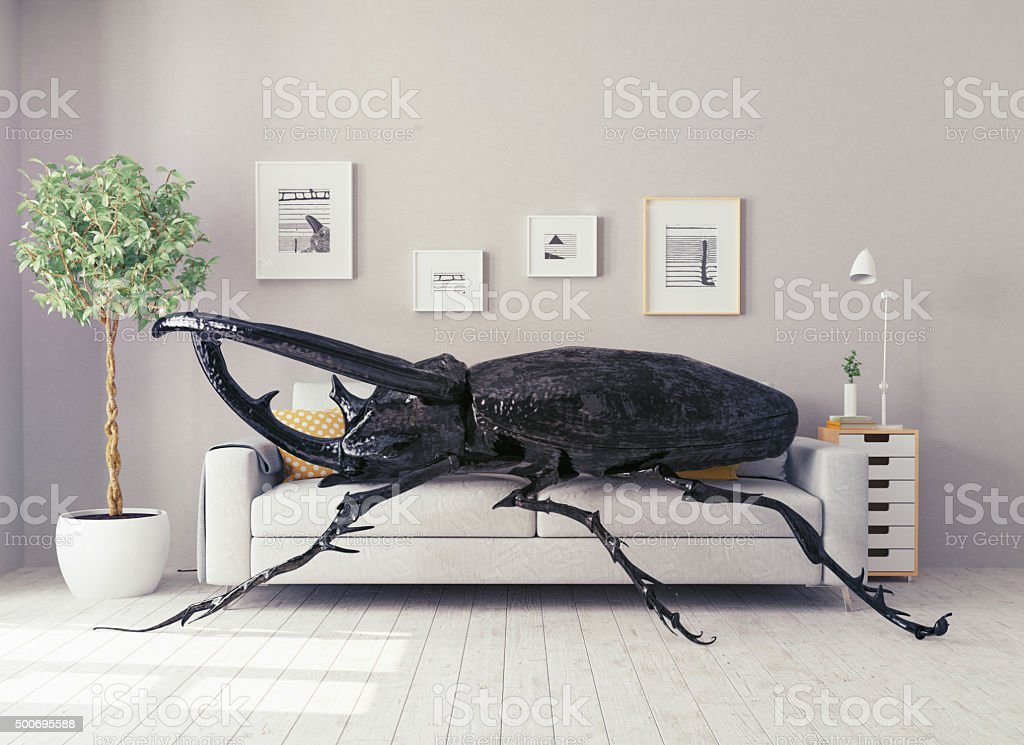 the beetle in the  room stock photo