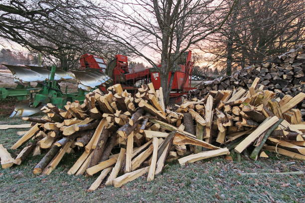 The beginning of winter. Firewood as a result of spring storms. Bavaria, Germany. stock photo