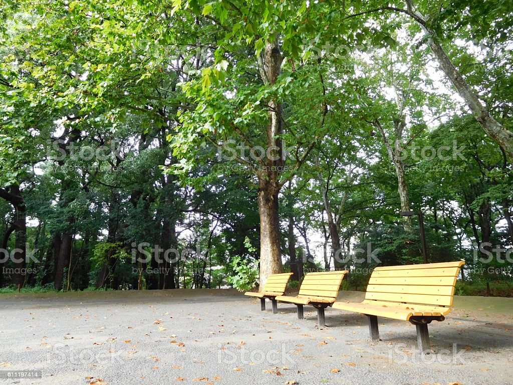 The benches on the playground in the morning – Foto
