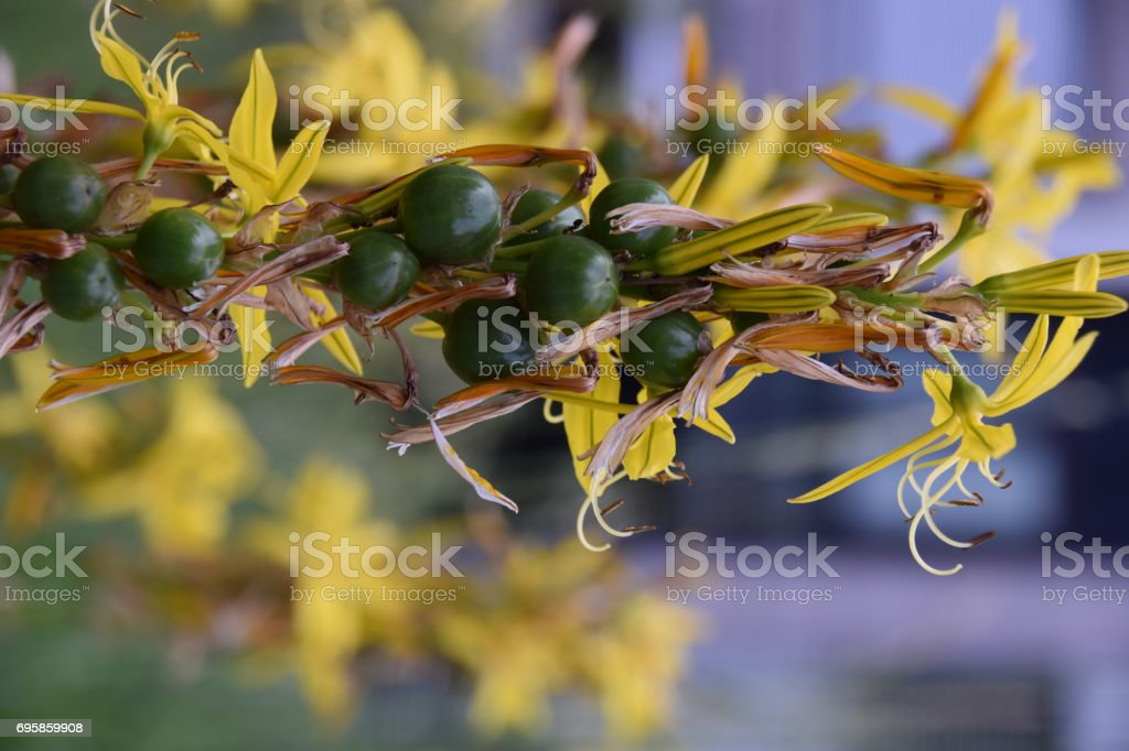 The Berry Plant stock photo