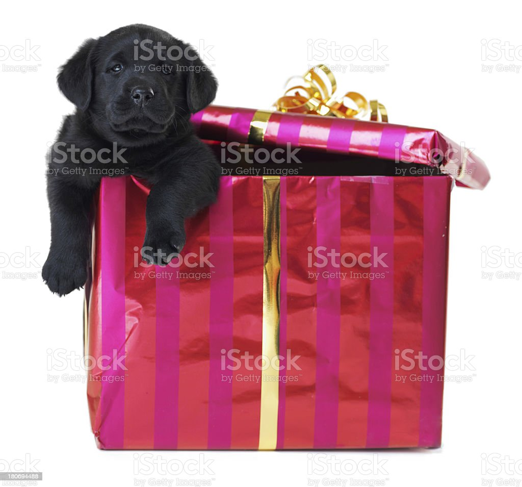 The best gift you could ever receive stock photo