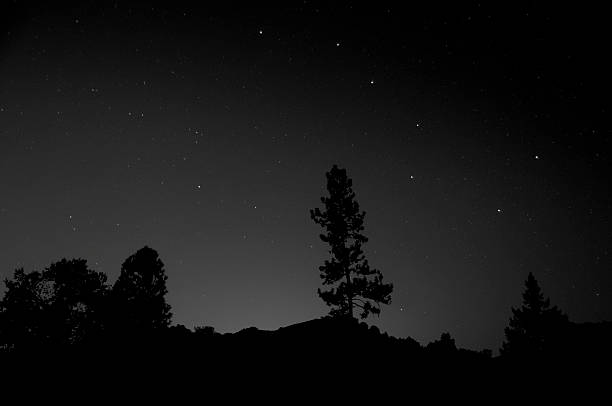the Big Dipper The Big Dipper hangs over a silhouetted tree. big dipper constellation stock pictures, royalty-free photos & images