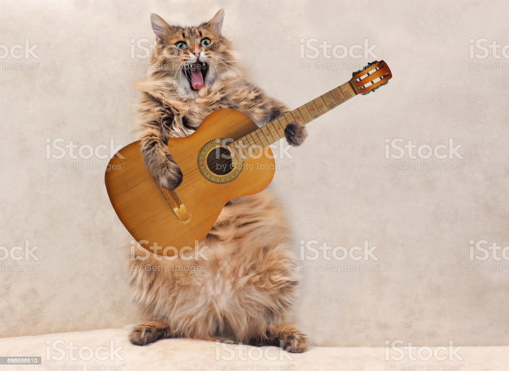 The big shaggy cat is very funny standing stock photo