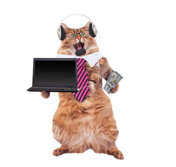 The big shaggy cat is very funny standinglaptop picture id1130830033?b=1&k=6&m=1130830033&s=612x612&w=0&h=kegebkphd ciuuwywwimtp2uyns9ak bniuxv7ryx4o=