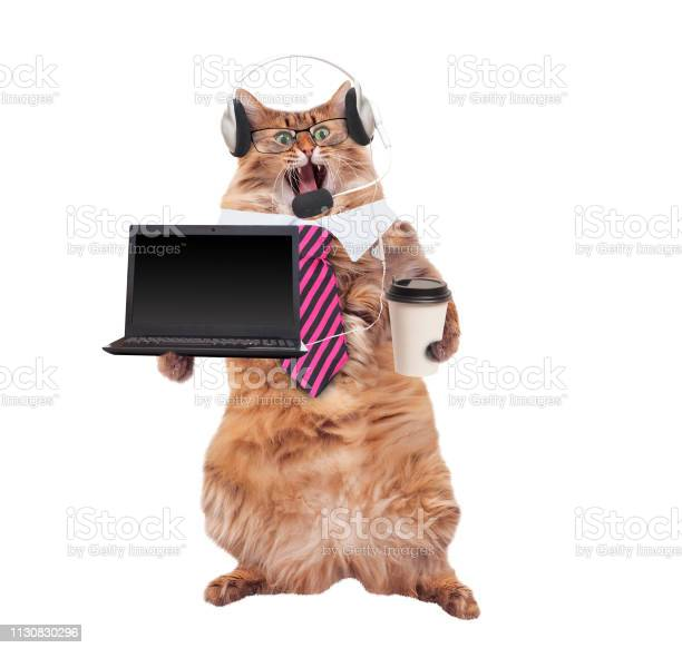 The big shaggy cat is very funny standinglaptop picture id1130830296?b=1&k=6&m=1130830296&s=612x612&h=hfu5tytnc8wgo rkvwhtdkmzodmrdzlnyesig7 zqwa=