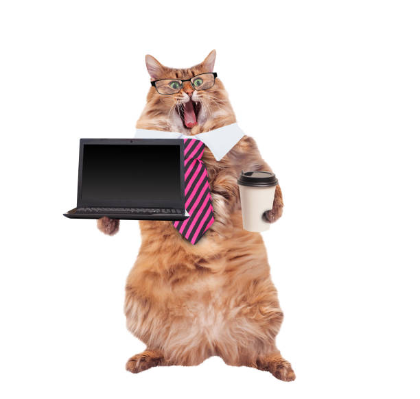 The big shaggy cat is very funny standinglaptop picture id931552164?b=1&k=6&m=931552164&s=612x612&w=0&h=ioyd5aq81jfo5mqhh17t20 teohyp6mehlkgbr7cfpu=