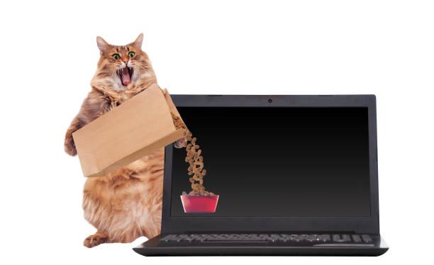 The big shaggy cat is very funny standinglaptop picture id931552272?b=1&k=6&m=931552272&s=612x612&w=0&h=obubjgjks kaw l2il0zpi yozlw4shlul7ygoxgmwa=