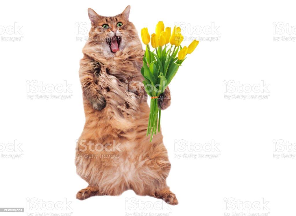 Le gros chat hirsute est très drôle standing.number 2 photo libre de droits