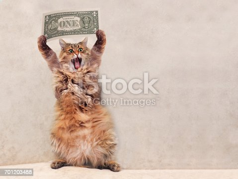 istock The big shaggy cat is very funny standing.shelter 3 701203488