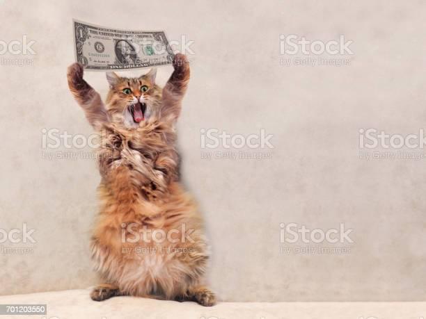 The big shaggy cat is very funny standingshelter 3 picture id701203550?b=1&k=6&m=701203550&s=612x612&h= bzmstph5rmk25tv0w2kkcfsuce2k0dkudhjoxzkors=
