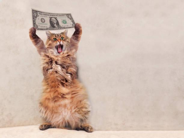 Cat Food No Tax