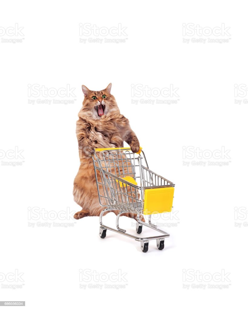 The big shaggy cat with shopping cart isolated on white..number 9 royalty-free stock photo