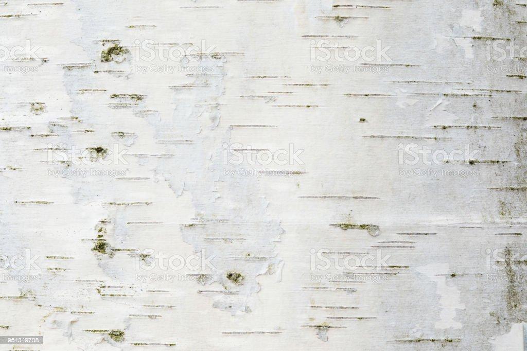 De berk bast textuur of achtergrond foto