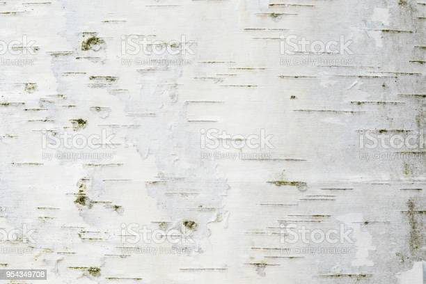 Photo of The birch bark texture or background