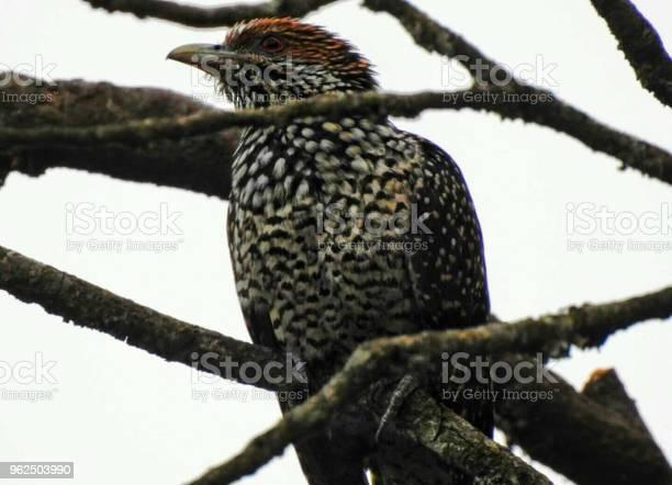 Foto de O Pássaro Na Floresta e mais fotos de stock de Animal