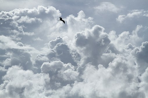 The bird is flying on the cloudy sky