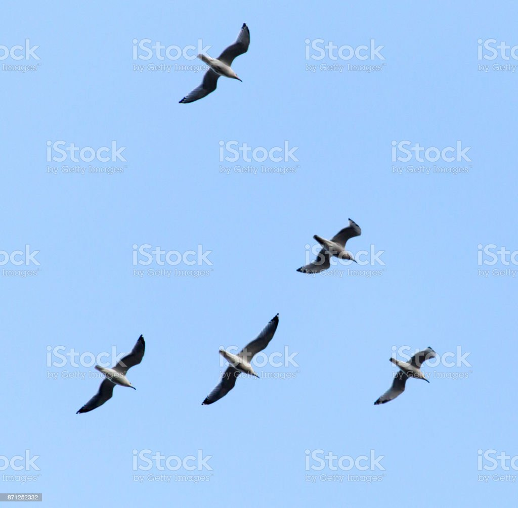 the birds fly south in the sky stock photo