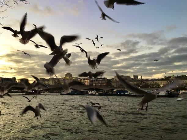 The Birds on London's South Bank. stock photo