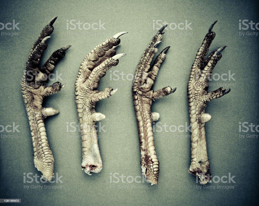 the birds stock photo