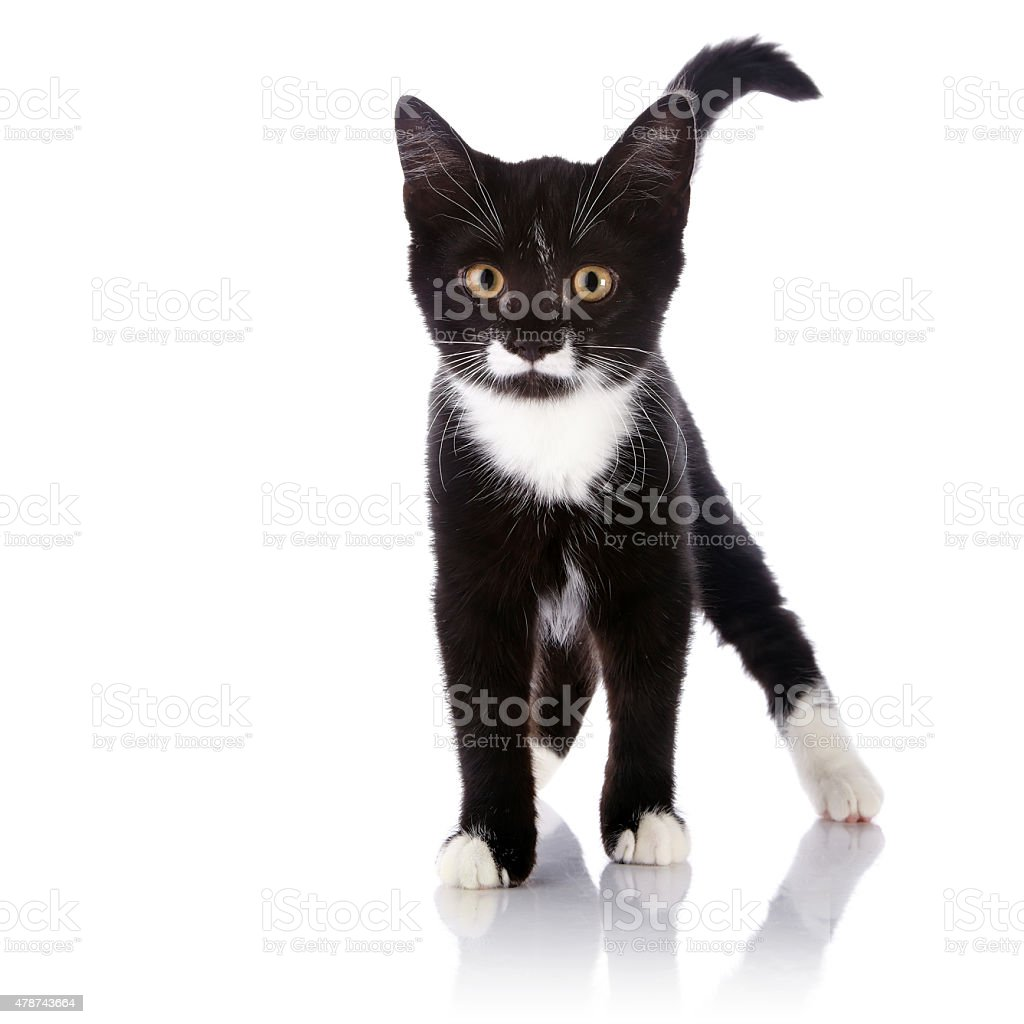 The black and white kitten costs stock photo