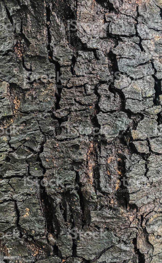 The black bark royalty-free stock photo